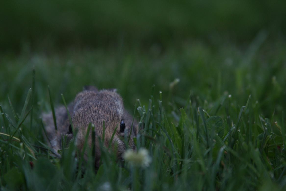 felix-in-grass