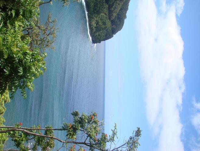 Scenery from the Road to Hana
