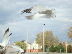 Seaguls Take to the Sky